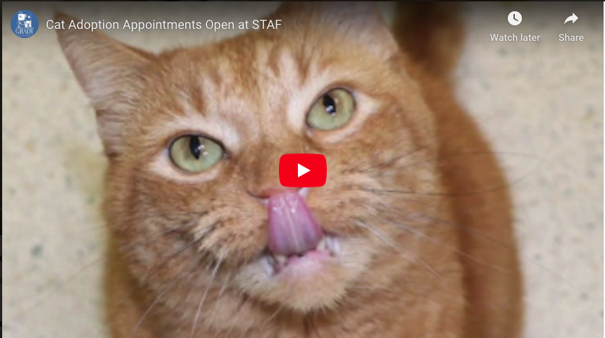 Cat Adoption Appointments Open at STAF