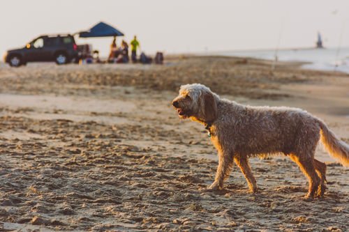3 Summer Dog Emergencies to Look Out For