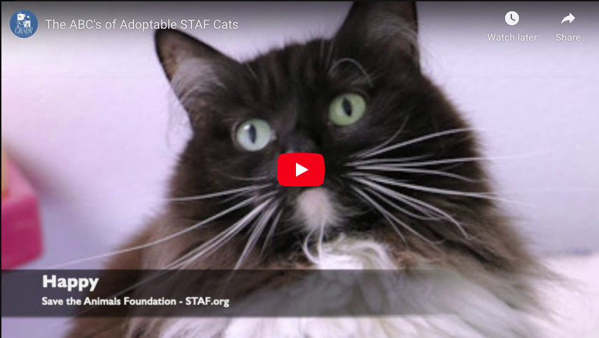 The ABC's of Adoptable STAF Cats