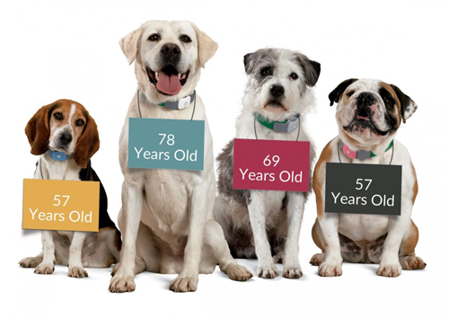 Annual Blood Work: an Essential Element of Your Senior Dog or Cat's Health