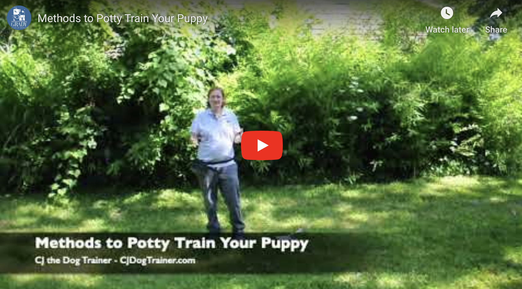 Methods to Potty Train Your Puppy