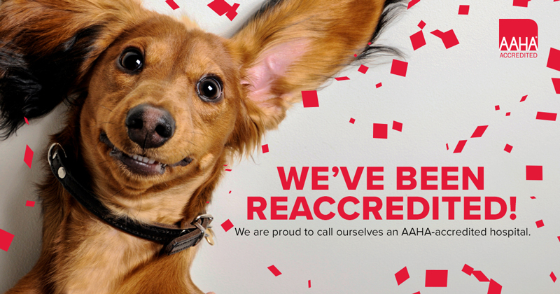 What's in AAHA Accreditation?