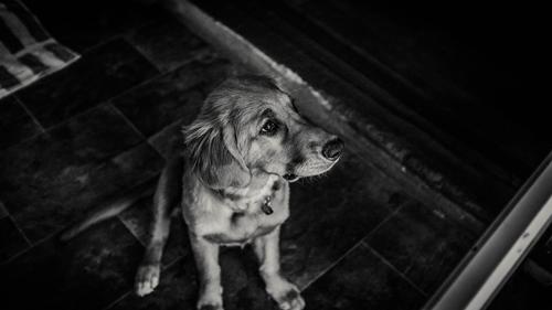 7 Dog Behaviors De-Mystified