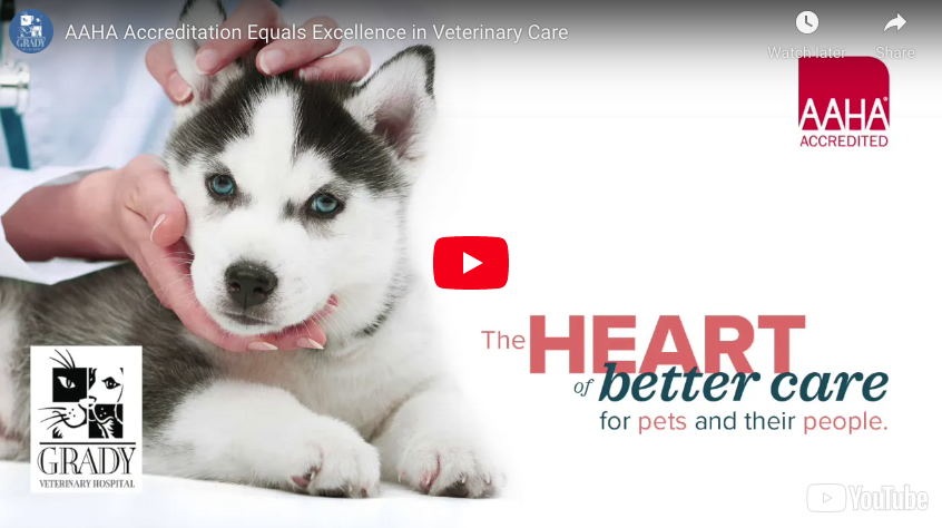 AAHA Accreditation Equals Excellence in Veterinary Care