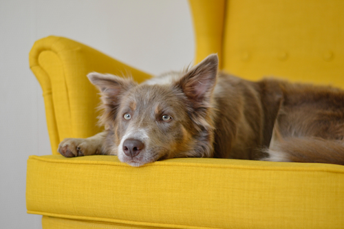 When Your Pet Has a Seizure: What to Do