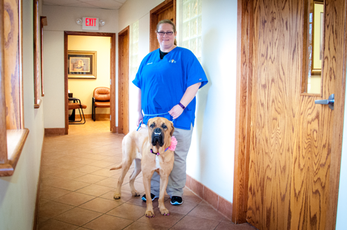 Meet Our Veterinary Receptionists