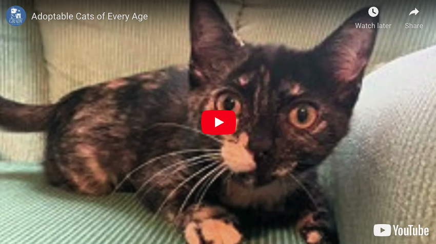 Adoptable Cats of Every Age