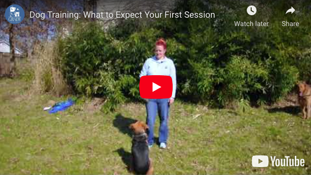 Dog Training: What to Expect Your First Session