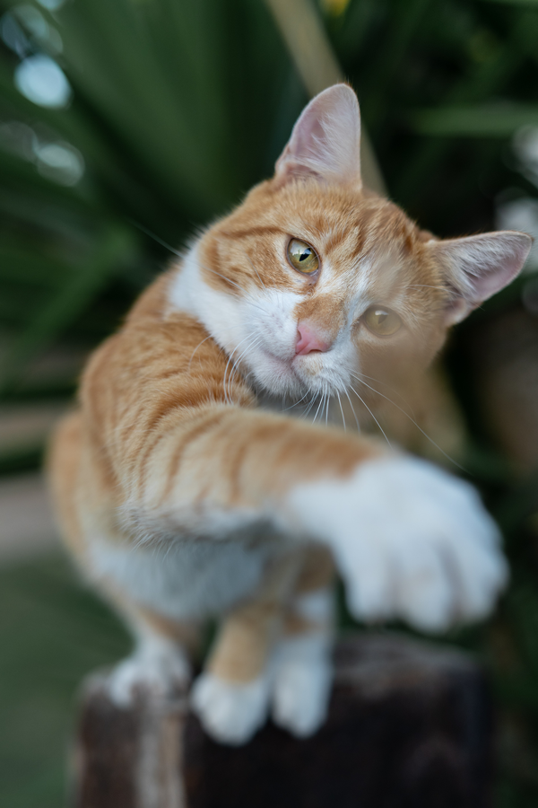 Check the Chip: Is Your Pet's Microchip Up-to-Date?