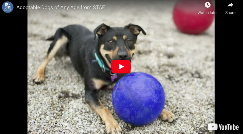Adoptable Dogs of Any Age from STAF