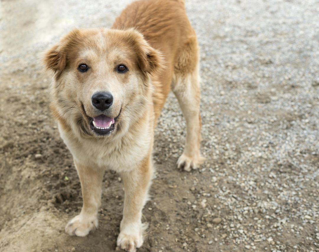 5 Great Shelter Dogs Who Want to Come Home